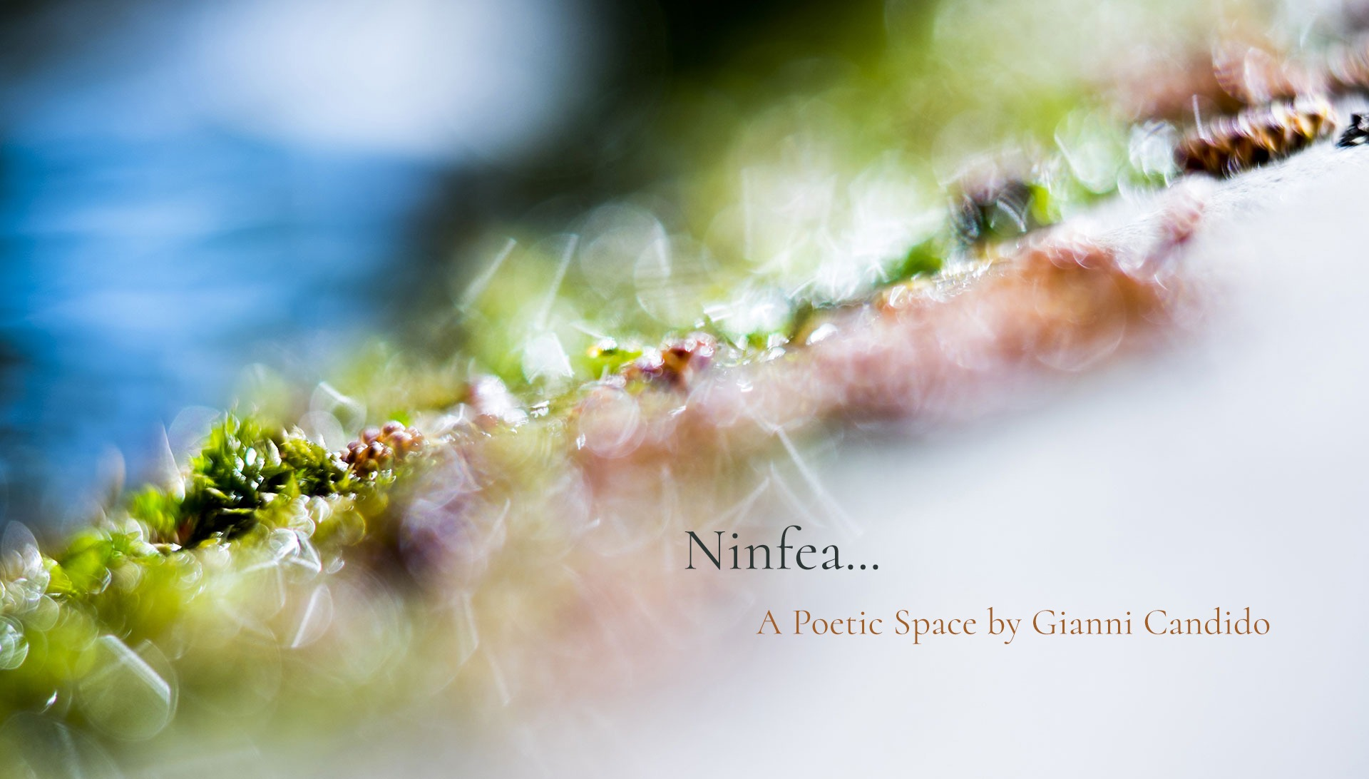 Ninfea - A Poetic Space by Gianni Candido